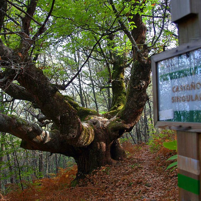 Route of the ancient chestnut trees